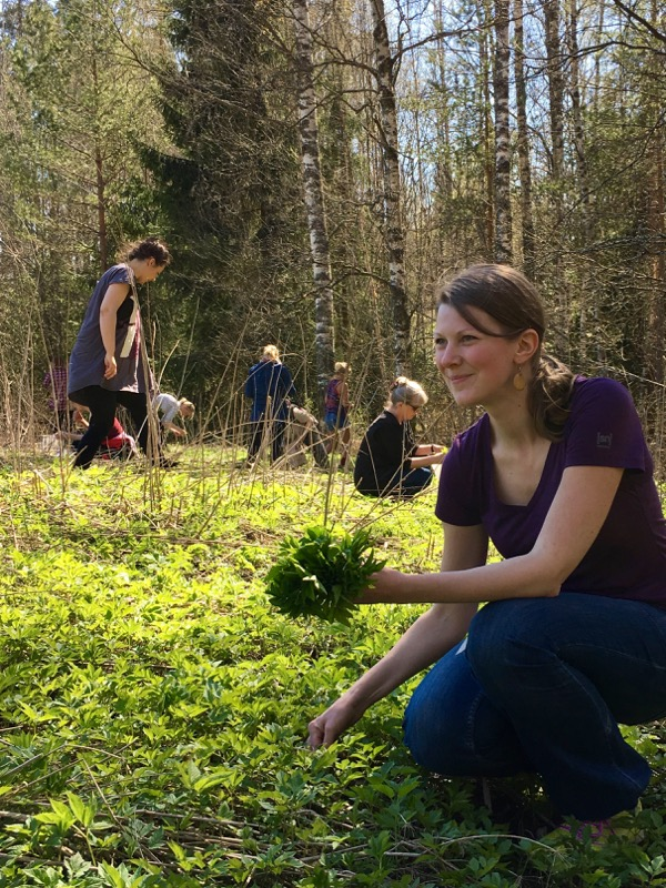 Kaisa Vermasheinä kerää vuohenputkea. Kuva: Katja Markula