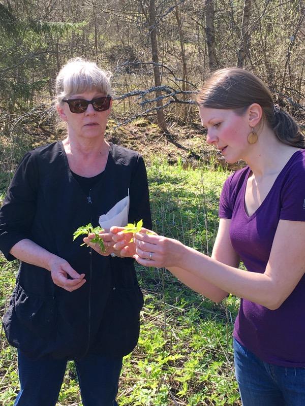 Vuohenputken tunnistusta Juuret maassa -kurssilla. Kuva: Katja Markula
