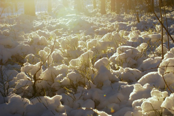 luminen-varvikko