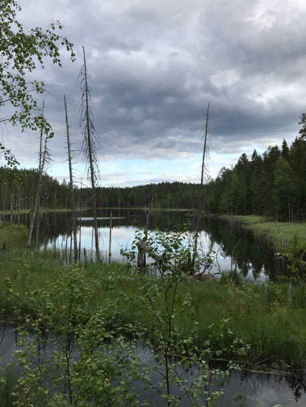 Hevosjärvi. Kuva: Kaisa Vermasheinä, Juuret maassa